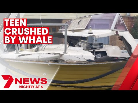 Teen fighting for life after being crushed by a whale off Narooma   7NEWS